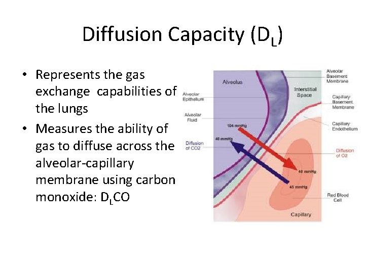 Diffusion Capacity (DL) • Represents the gas exchange capabilities of the lungs • Measures
