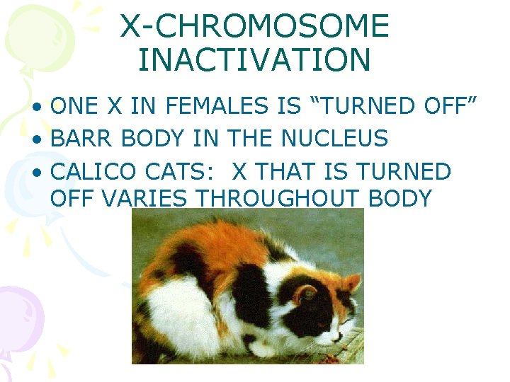 """X-CHROMOSOME INACTIVATION • ONE X IN FEMALES IS """"TURNED OFF"""" • BARR BODY IN"""