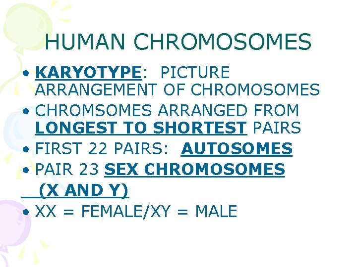 HUMAN CHROMOSOMES • KARYOTYPE: PICTURE ARRANGEMENT OF CHROMOSOMES • CHROMSOMES ARRANGED FROM LONGEST TO