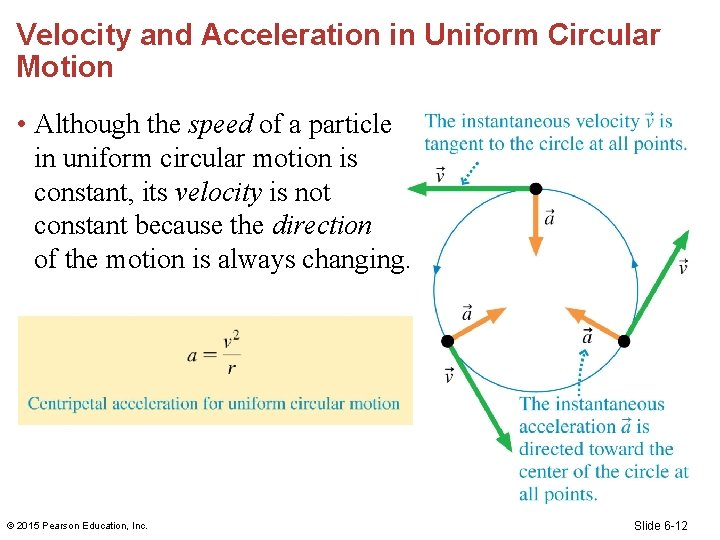 Velocity and Acceleration in Uniform Circular Motion • Although the speed of a particle