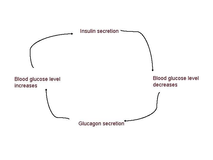 Insulin secretion Blood glucose level decreases Blood glucose level increases Glucagon secretion