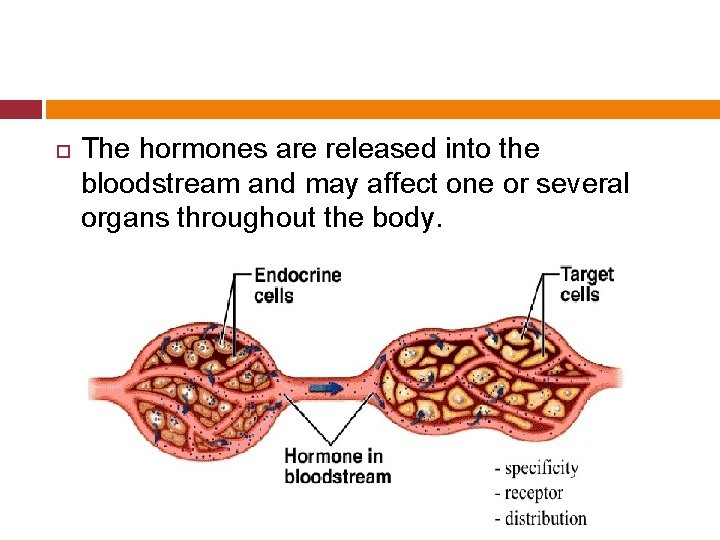 The hormones are released into the bloodstream and may affect one or several