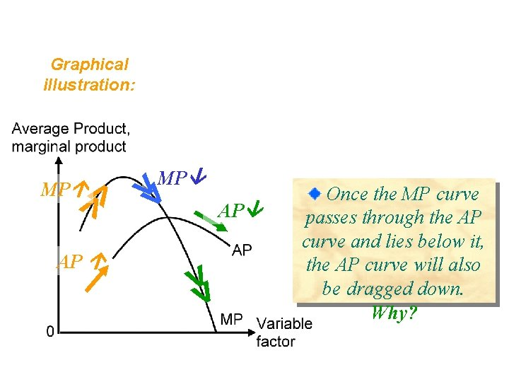 Graphical illustration: >> AP >> MP Once the MP curve passes through the AP