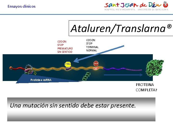 Ensayos clínicos Ataluren/Translarna® CODON STOP PREMATURO SIN SENTIDO CODON STOP TERMINAL NORMAL YIELD Proteina