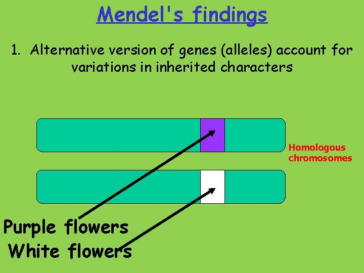 Mendel's findings 1. Alternative version of genes (alleles) account for variations in inherited characters