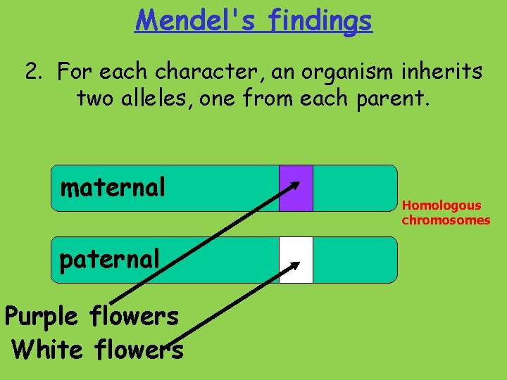 Mendel's findings 2. For each character, an organism inherits two alleles, one from each