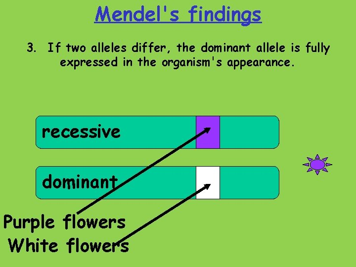 Mendel's findings 3. If two alleles differ, the dominant allele is fully expressed in