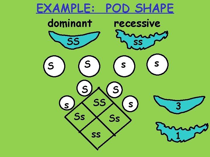 EXAMPLE: POD SHAPE dominant recessive SS ss S S S s s s SS