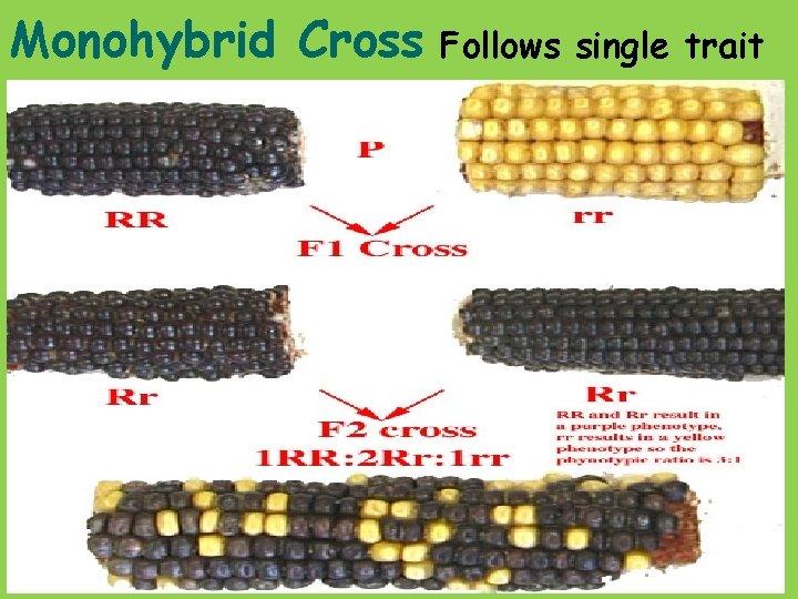 Monohybrid Cross Follows single trait