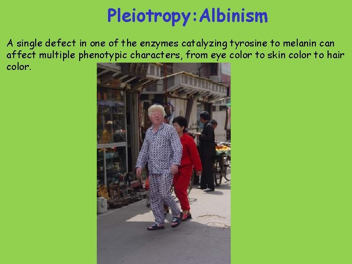 Pleiotropy: Albinism A single defect in one of the enzymes catalyzing tyrosine to melanin