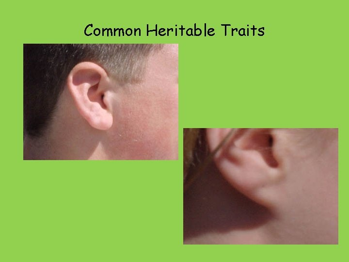 Common Heritable Traits