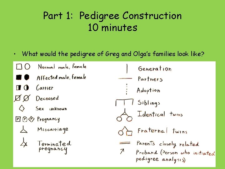 Part 1: Pedigree Construction 10 minutes • What would the pedigree of Greg and