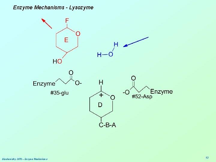 Enzyme Mechanisms - Lysozyme Biochemistry 3070 – Enzyme Mechanisms 10