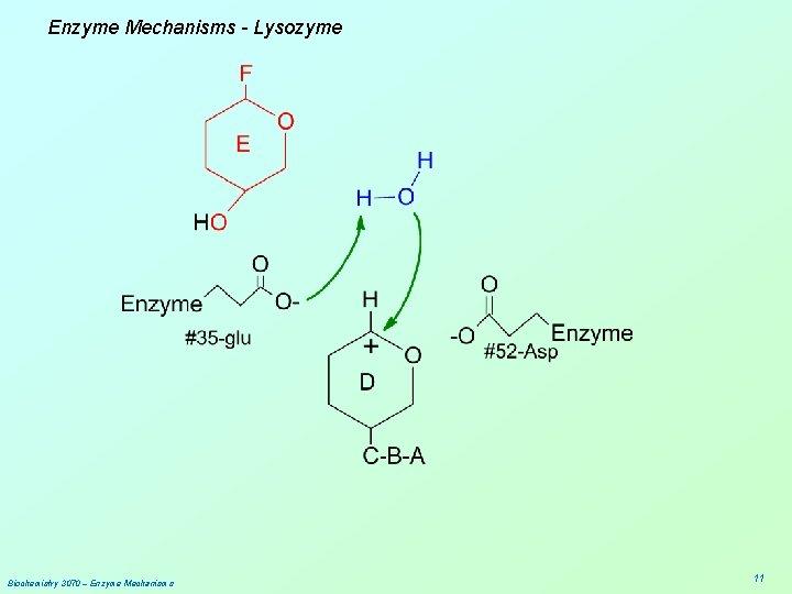 Enzyme Mechanisms - Lysozyme Biochemistry 3070 – Enzyme Mechanisms 11