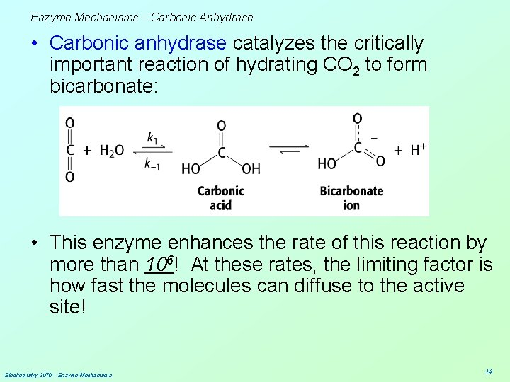 Enzyme Mechanisms – Carbonic Anhydrase • Carbonic anhydrase catalyzes the critically important reaction of