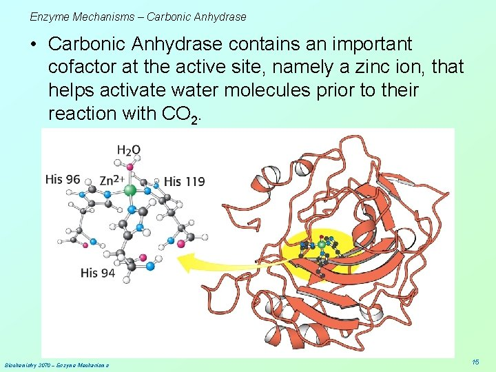Enzyme Mechanisms – Carbonic Anhydrase • Carbonic Anhydrase contains an important cofactor at the