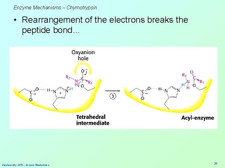 Enzyme Mechanisms – Chymotrypsin • Rearrangement of the electrons breaks the peptide bond… Biochemistry