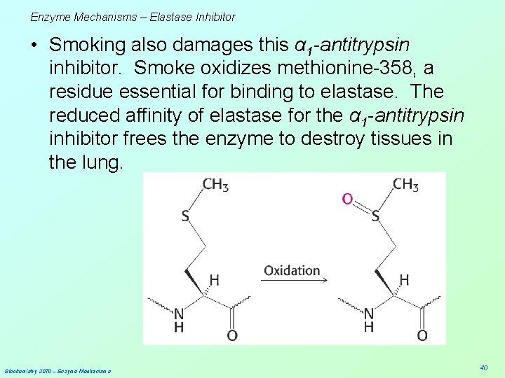 Enzyme Mechanisms – Elastase Inhibitor • Smoking also damages this α 1 -antitrypsin inhibitor.