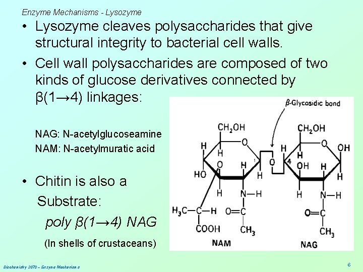 Enzyme Mechanisms - Lysozyme • Lysozyme cleaves polysaccharides that give structural integrity to bacterial