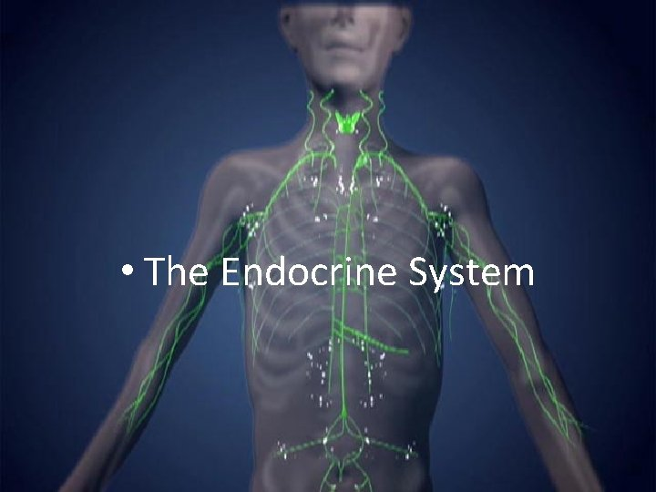 • The Endocrine System
