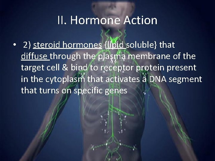 II. Hormone Action • 2) steroid hormones {lipid soluble} that diffuse through the plasma