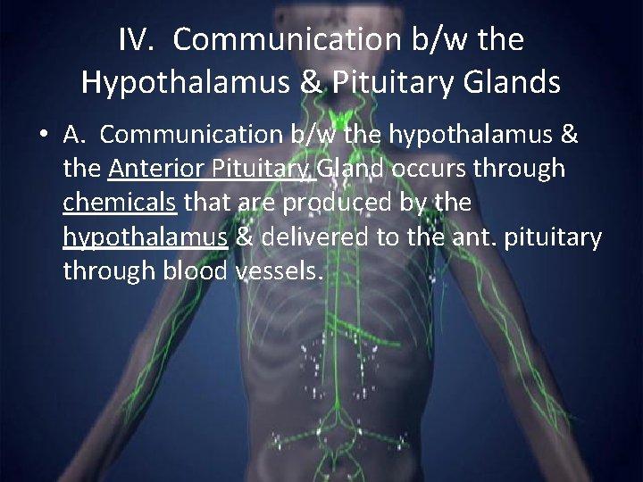 IV. Communication b/w the Hypothalamus & Pituitary Glands • A. Communication b/w the hypothalamus