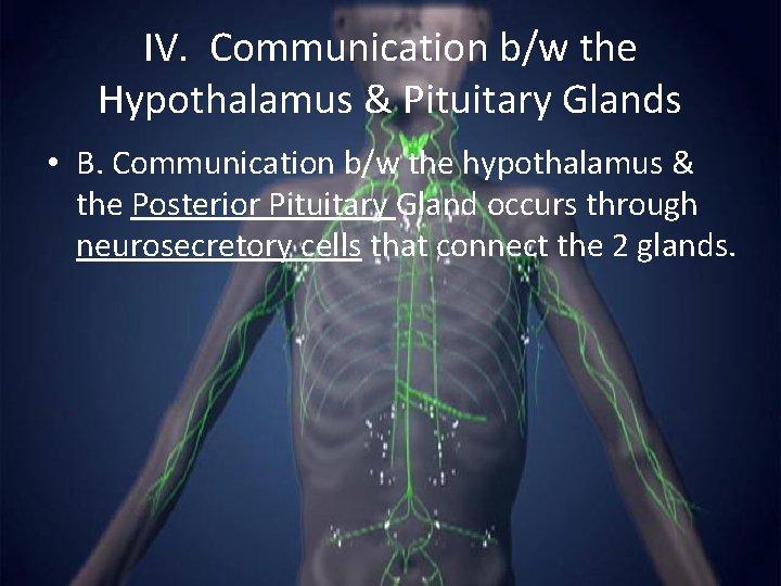 IV. Communication b/w the Hypothalamus & Pituitary Glands • B. Communication b/w the hypothalamus