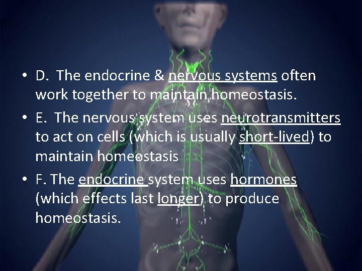 • D. The endocrine & nervous systems often work together to maintain homeostasis.