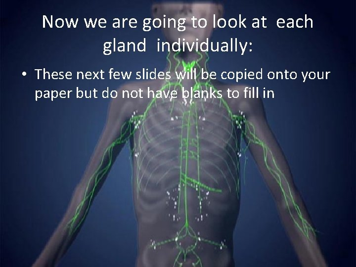 Now we are going to look at each gland individually: • These next few