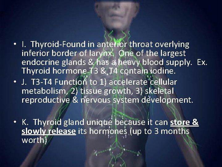 • I. Thyroid-Found in anterior throat overlying inferior border of larynx. One of