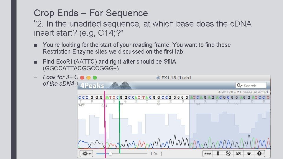 """Crop Ends – For Sequence """" 2. In the unedited sequence, at which base"""