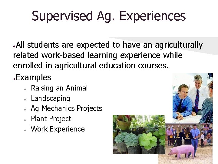 Supervised Ag. Experiences All students are expected to have an agriculturally related work-based learning