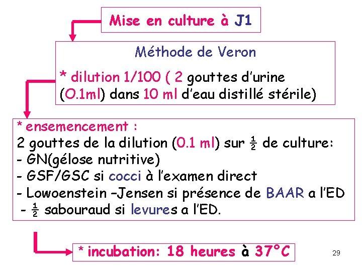 Mise en culture à J 1 Méthode de Veron * dilution 1/100 ( 2