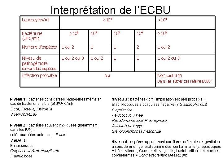 Interprétation de l'ECBU Leucocytes/ml Bactériurie (UFC/ml) ≥ 104 ≥ 105 <104 103 104 ≥