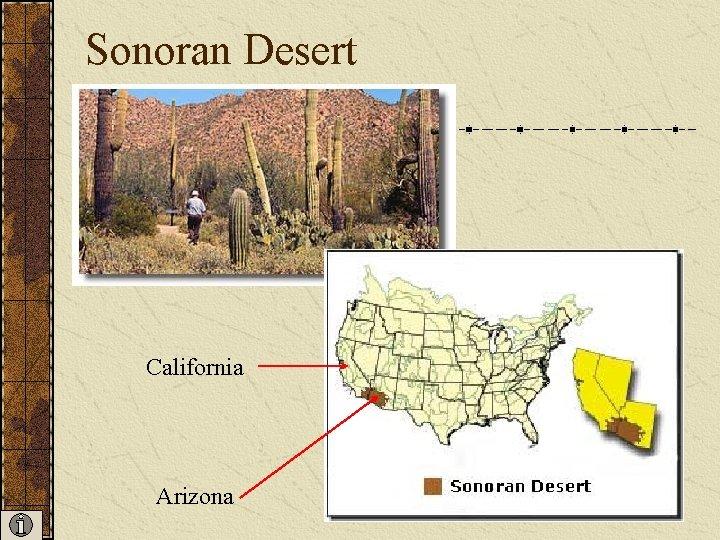 Sonoran Desert California Arizona