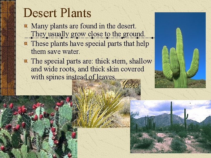 Desert Plants Many plants are found in the desert. They usually grow close to