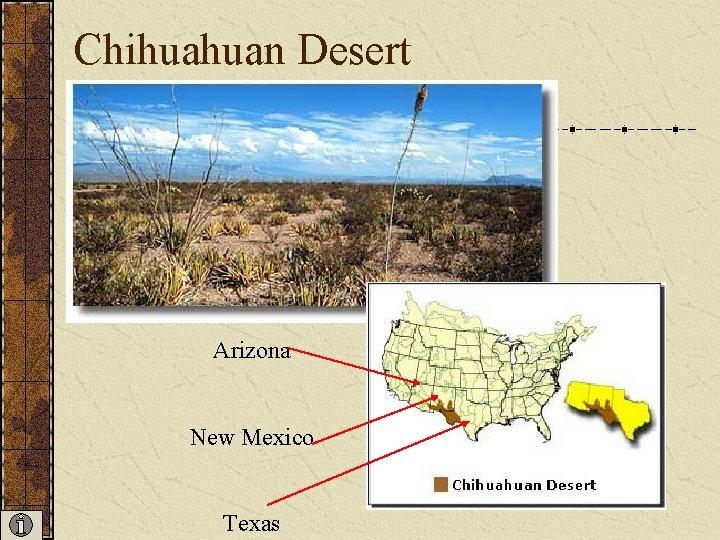 Chihuahuan Desert Arizona New Mexico Texas