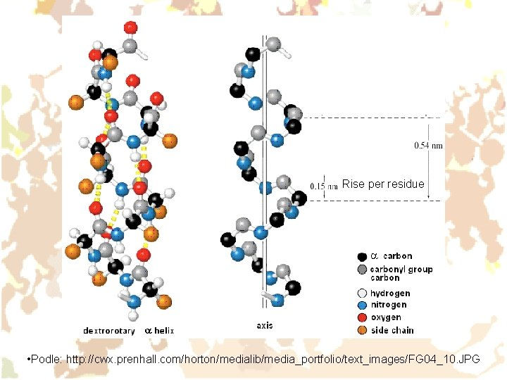 Rise per residue • Podle: http: //cwx. prenhall. com/horton/medialib/media_portfolio/text_images/FG 04_10. JPG