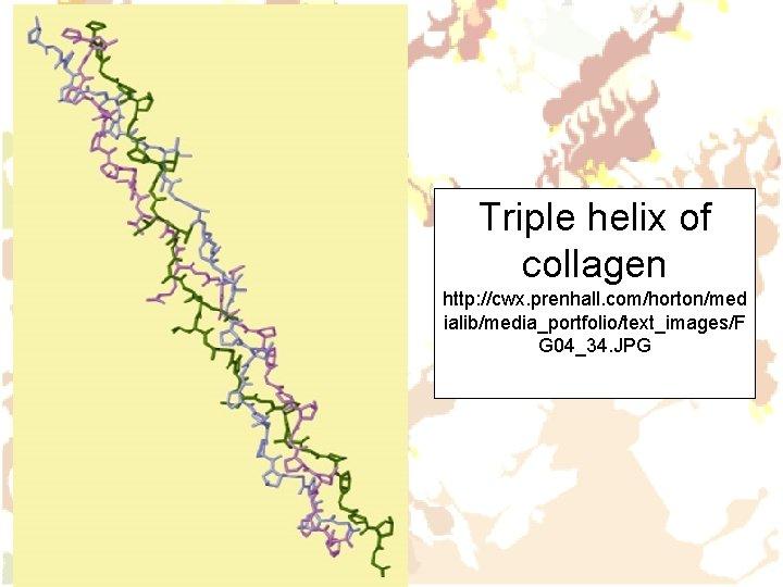 Triple helix of collagen http: //cwx. prenhall. com/horton/med ialib/media_portfolio/text_images/F G 04_34. JPG