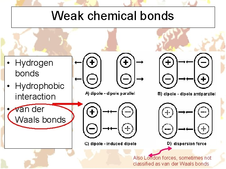 Weak chemical bonds • Hydrogen bonds • Hydrophobic interaction • van der Waals bonds