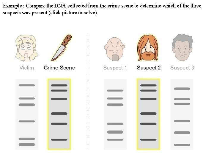 Example : Compare the DNA collected from the crime scene to determine which of