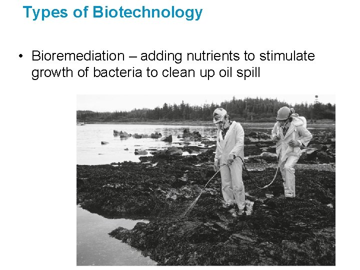 Types of Biotechnology • Bioremediation – adding nutrients to stimulate growth of bacteria to