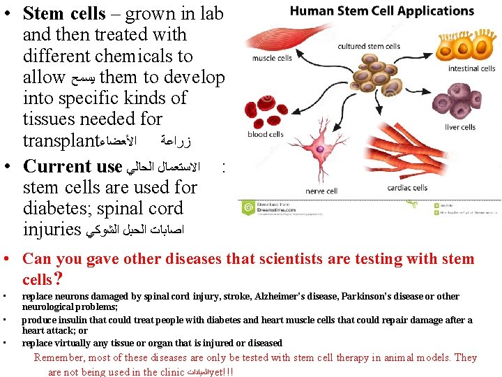 • Stem cells – grown in lab and then treated with different chemicals