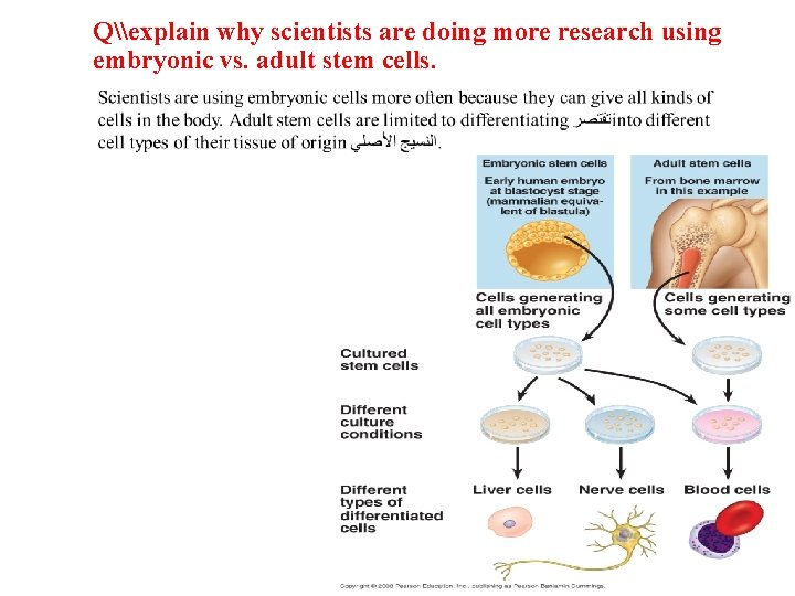 Q\explain why scientists are doing more research using embryonic vs. adult stem cells.