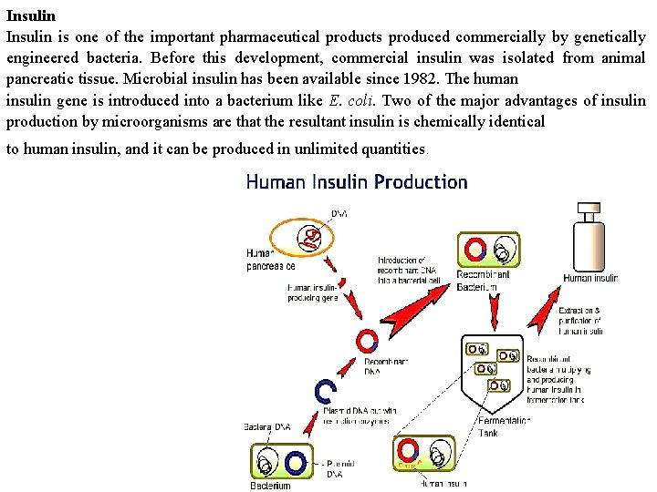 Insulin is one of the important pharmaceutical products produced commercially by genetically engineered bacteria.