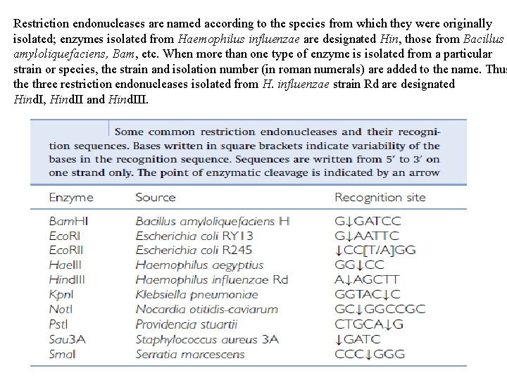 Restriction endonucleases are named according to the species from which they were originally isolated;