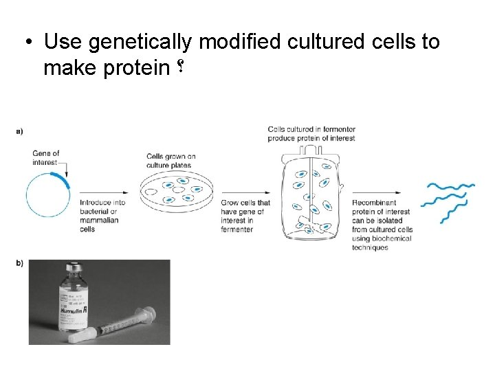 • Use genetically modified cultured cells to make protein ؟