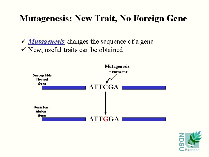 Mutagenesis: New Trait, No Foreign Gene ü Mutagenesis changes the sequence of a gene