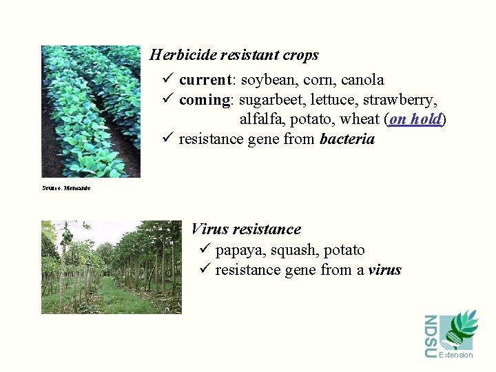 Herbicide resistant crops ü current: soybean, corn, canola ü coming: sugarbeet, lettuce, strawberry, alfalfa,