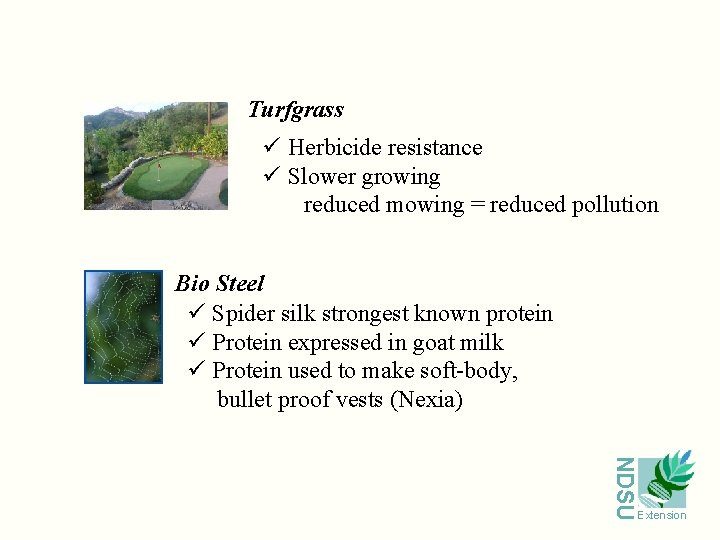 Turfgrass ü Herbicide resistance ü Slower growing reduced mowing = reduced pollution Bio Steel